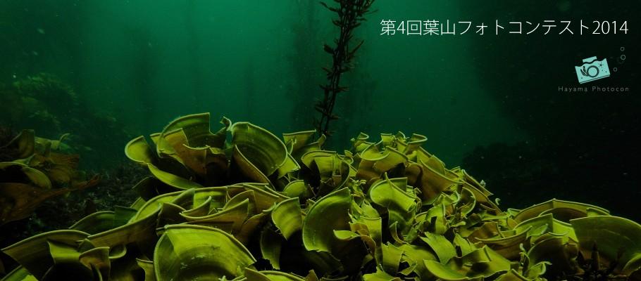 2014年度「第4回葉山フォトコンテスト」 | 葉山の海を愛するダイバーのフォトコンテスト