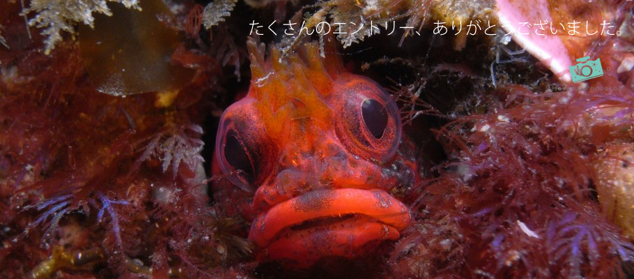 2013年度「第3回葉山フォトコンテスト」 | 葉山の海を愛するダイバーのフォトコンテスト