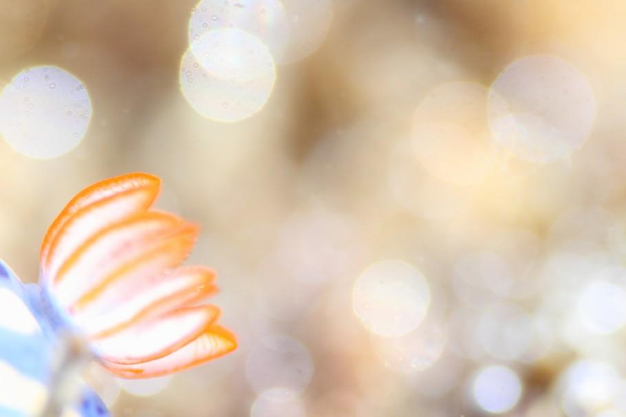 女性の作品と思って選んだら、男性の作品でした(笑) 水中写真はやっぱり夢があった方がいいなと思わせてくれる作品です。 水中ならではの面白い表現が出来ていて鍵井賞に選びました。 ウミウシのとっても可愛いオレンジ色のエラと気泡のきらめきがうまくマッチして、夢色のような世界だと思いました。生き物への興味やこういう環境の面白さを活かした素晴らしい水中写真だと思います。